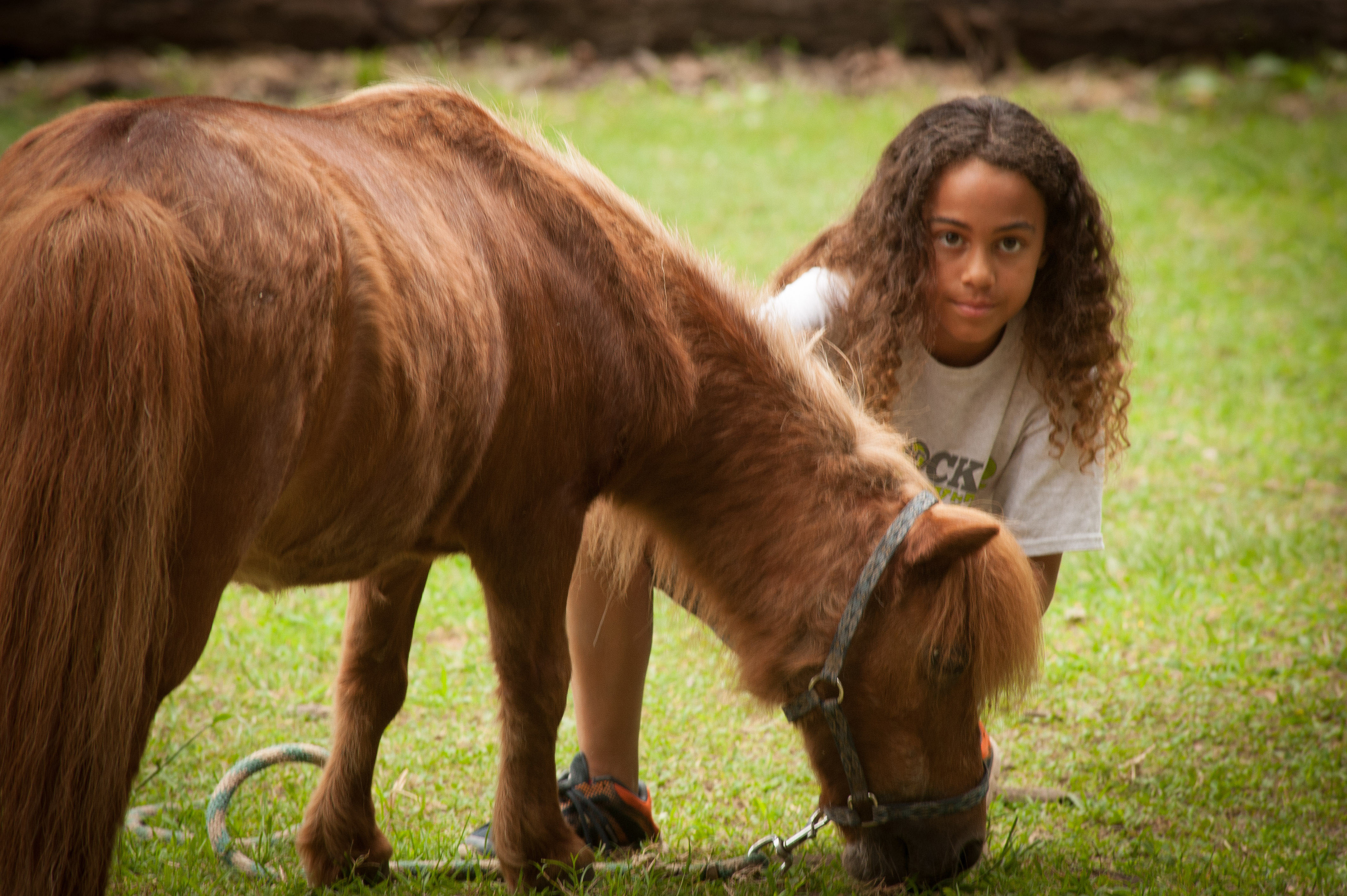 Miniature Horse at Dead Broke Farm